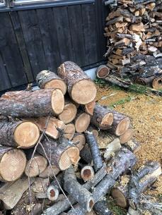 薪になる木々の写真素材 [FYI01221659]