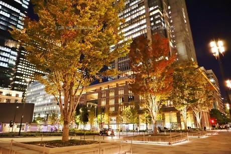 東京駅界隈の紅葉とライトアップの写真素材 [FYI01221714]