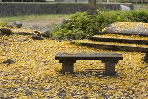 イチョウの葉とベンチの写真素材 [FYI01221845]