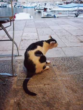 港町の猫(クロアチア・ドゥブロヴニク)の写真素材 [FYI01221891]