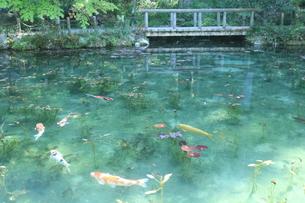 モネの池 の写真素材 [FYI01222202]