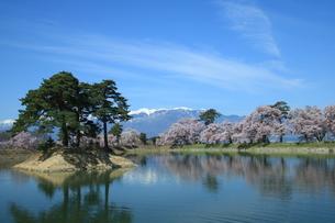 中央アルプスと桜の写真素材 [FYI01222205]