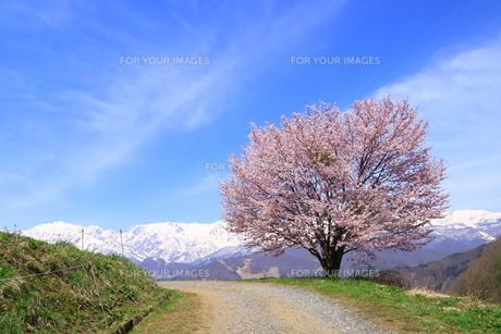 白馬村の春の写真素材 [FYI01222207]