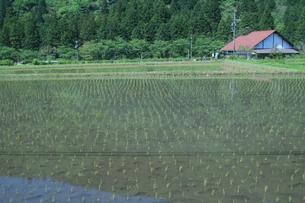 田園風景の写真素材 [FYI01222209]