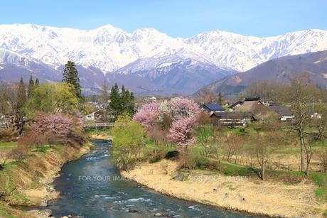 白馬村の春の写真素材 [FYI01222212]