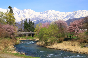 白馬村の春の写真素材 [FYI01222214]