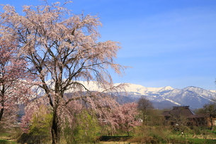 白馬村の春の写真素材 [FYI01222215]