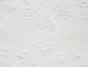 模様が入った白いすき紙のテクスチャーの写真素材 [FYI01222254]
