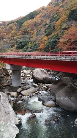 紅葉狩りの写真素材 [FYI01222263]