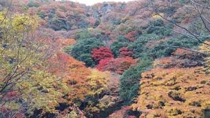 紅葉狩りの写真素材 [FYI01222266]