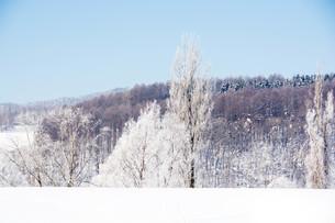 冬の寒い朝の写真素材 [FYI01222355]