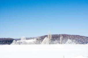 冬の寒い朝の写真素材 [FYI01222356]