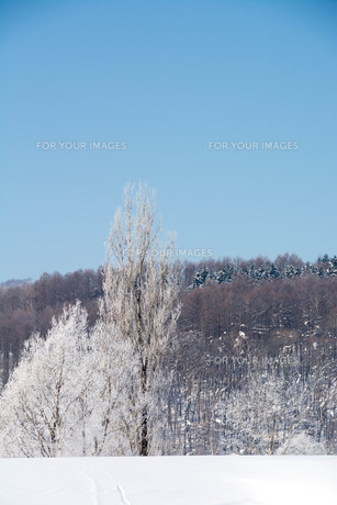 冬の寒い朝の写真素材 [FYI01222357]