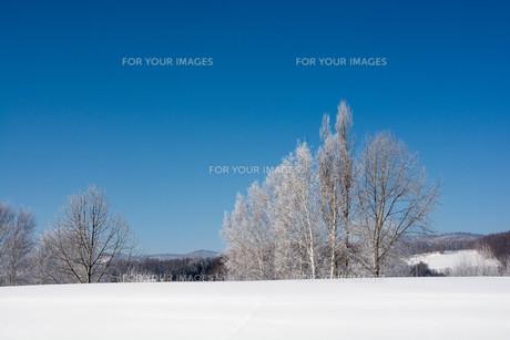 冬の寒い朝の写真素材 [FYI01222358]