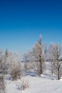 冬の寒い朝の写真素材 [FYI01222363]