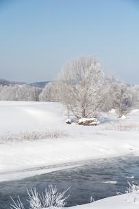 寒い冬の朝の川の写真素材 [FYI01222366]