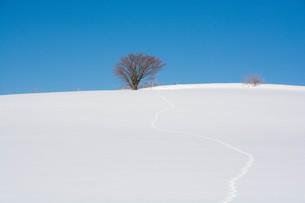雪の丘の上の冬木立と青空の写真素材 [FYI01222374]