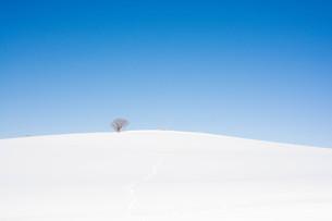 雪の丘の上の冬木立と青空の写真素材 [FYI01222376]