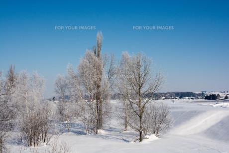 冬の寒い朝の写真素材 [FYI01222379]