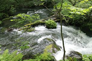 自然観溢れる、奥入瀬渓流の写真素材 [FYI01222449]