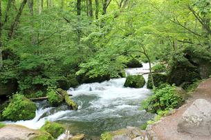 緑満杯、爽やか奥入瀬渓流の写真素材 [FYI01222452]