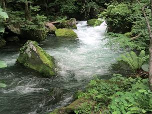 自然観溢れる、新緑の奥入瀬渓流の写真素材 [FYI01222453]