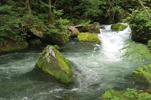自然観溢れる、新緑の奥入瀬渓流の写真素材 [FYI01222454]