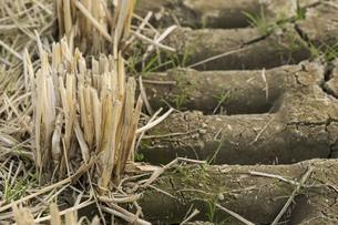 稲刈り後の田んぼの写真素材 [FYI01222462]