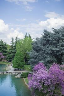 イタリアの庭園の写真素材 [FYI01222483]