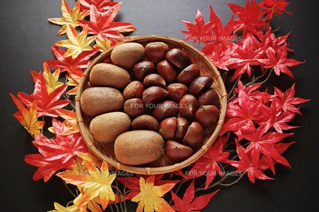 横位置の紅葉のモミジと笊に入った栗とキウイフルーツの写真素材 [FYI01222504]