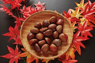 紅葉のモミジと笊に入った栗の写真素材 [FYI01222508]