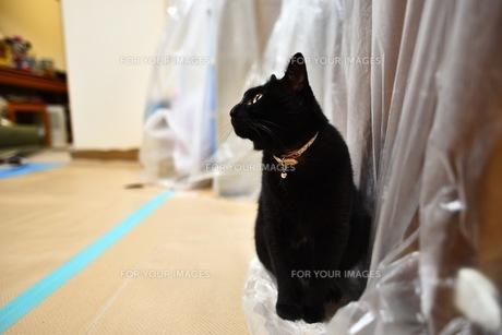 たそがれ猫の写真素材 [FYI01222523]