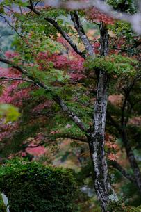 京都の紅葉の写真素材 [FYI01222541]