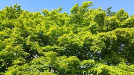 緑の写真素材 [FYI01222595]