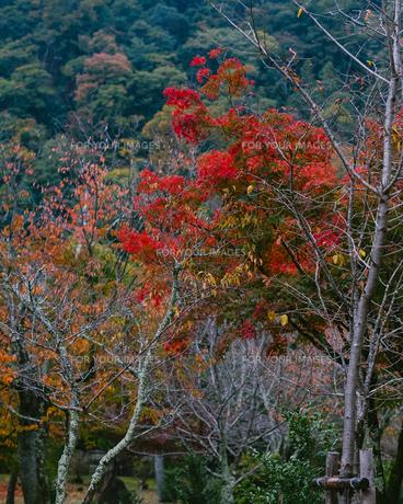 京都の秋の写真素材 [FYI01222699]