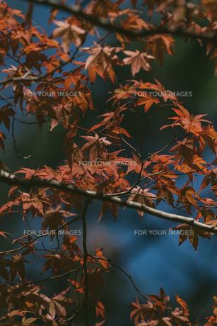 京都の秋の写真素材 [FYI01222700]