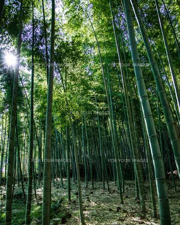 京都嵐山の竹林の写真素材 [FYI01222702]