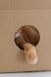 手を出す猫の写真素材 [FYI01222741]