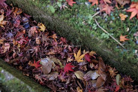 秋の紅葉・景色・もみじ・落ち葉の写真素材 [FYI01222812]