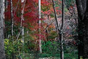 秋の紅葉・景色・もみじ・落ち葉の写真素材 [FYI01222813]