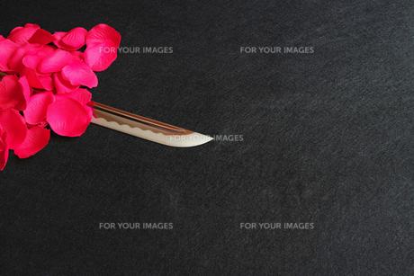 黒背景に赤い花弁の下に置いた日本刀の刀身の写真素材 [FYI01222834]