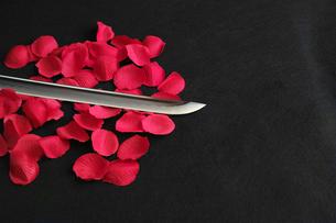 黒背景に赤い花弁の上に置いた日本刀の刀身の写真素材 [FYI01222835]