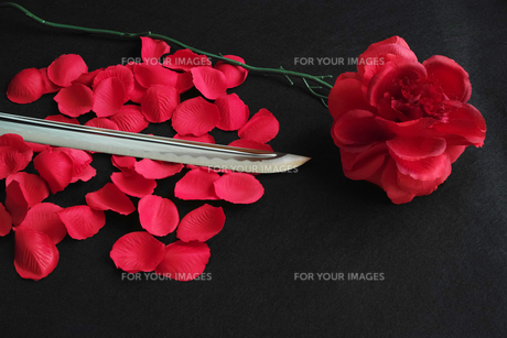 黒背景に赤いバラと花弁の上に置いた日本刀の刀身の写真素材 [FYI01222836]