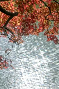 兵庫県神戸市 再度公園 紅葉の写真素材 [FYI01222884]