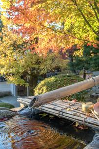 兵庫県 播州清水寺 紅葉の写真素材 [FYI01222902]