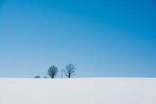 雪の丘の上の冬木立 美瑛町の写真素材 [FYI01222910]