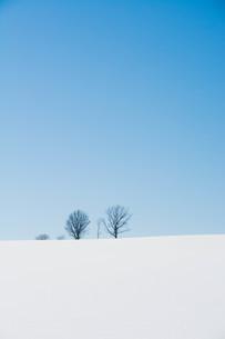 雪の丘の上の冬木立 美瑛町の写真素材 [FYI01222911]