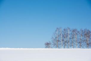 青空と冬のシラカバ並木 美瑛町の写真素材 [FYI01222914]