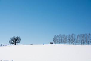 青空と冬のシラカバ並木 美瑛町の写真素材 [FYI01222915]