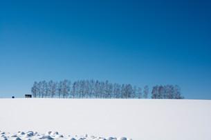 青空と冬のシラカバ並木 美瑛町の写真素材 [FYI01222916]